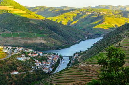 vid: colinas de viñedos en el valle del río Douro, Portugal