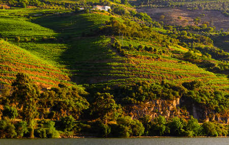 portugal agriculture: vineyard hills in the river Douro valley, Portugal