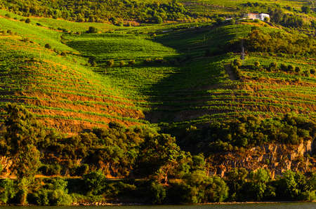 douro: vineyard hills in the river Douro valley, Portugal