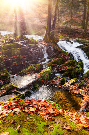 waterfall in misty autumn forest at sunset, Harz National Park, Germany Standard-Bild - 130059166