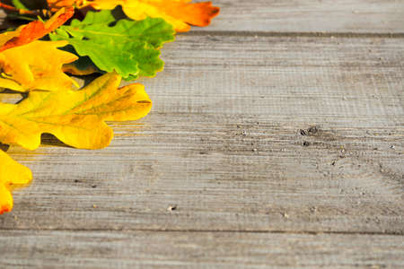 Green, yellow and red autumn leaves on a wooden table. Stock Photo - 130059193