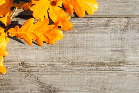 Green, yellow and red autumn leaves on a wooden table. Stock Photo