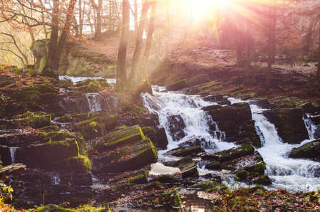 waterfall in misty autumn forest at sunset, Harz National Park, Germany Standard-Bild - 130059207