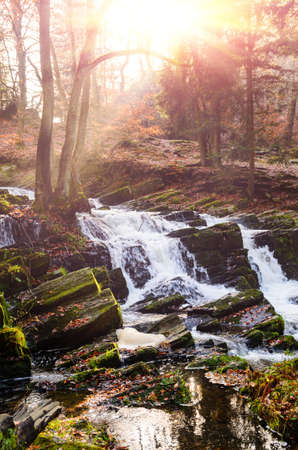 waterfall in misty autumn forest at sunset, Harz National Park, Germany Standard-Bild - 130059208