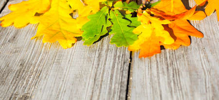 Green, yellow and red autumn leaves on a wooden table. Stock Photo - 130059219