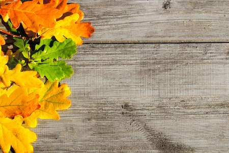 Green, yellow and red autumn leaves on a wooden table. Stock Photo - 130059235