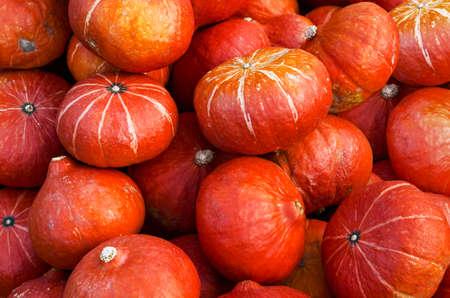 Set of orange pumpkins background