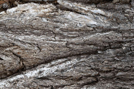 image of a section of old elm bark for a background or texture