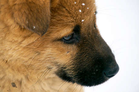 sad redhead puppy sitting on a background of white snow