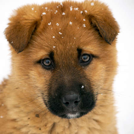 sad redhead puppy sitting on a background of white snow Stockfoto