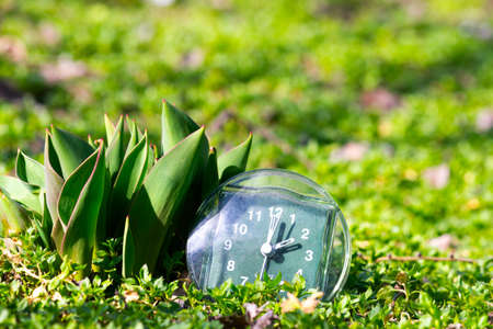 the transition to summer time, the arrival of spring, the clock on the green spring grass next to the young unblown tulip flower on a bright sunny day place for inscription Stock Photo - 125217487