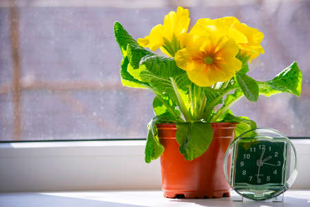 the transition to summer time, the arrival of spring, the clock standing on the sun-drenched window-sill next to the yellow flower, a place for the inscription Stock Photo - 125217488