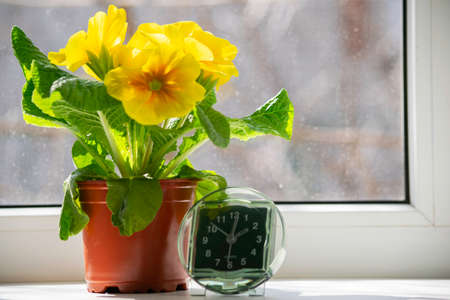 the transition to summer time, the arrival of spring, the clock standing on the sun-drenched window-sill next to the yellow flower, a place for the inscription Stock Photo - 125217490
