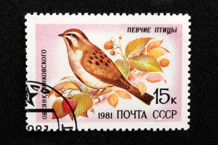 The USSR postage stamp, series - Songbirds, 1981, Yankovsky Porridge Emberiza jankowskii