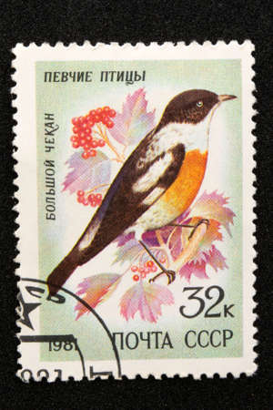 The USSR postage stamp, series - Songbirds, 1981 big chisel Saxicola insignis