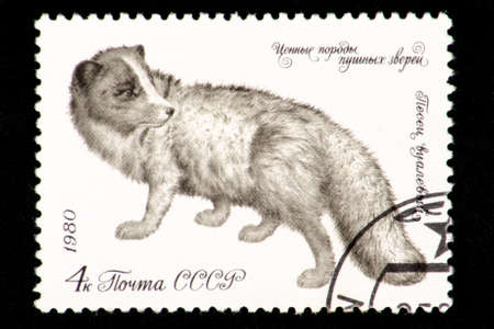 07.24.2019 Divnoe Stavropol Territory Russia - USSR postage stamp 1980. series - Valuable breeds of fur animals. The Arctic fox is veil. Arctic fox on a white background