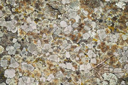the surface of old slate stone for background, texture Stock Photo