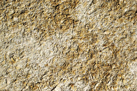 old weathered shell stone surface background texture backdrop