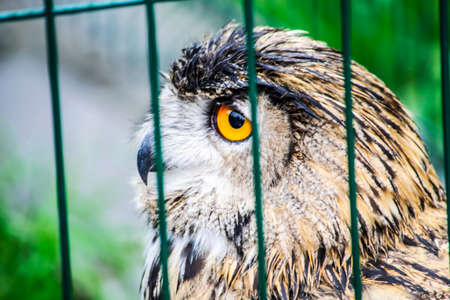owl with huge yellow eyes sits in a cage Stock fotó