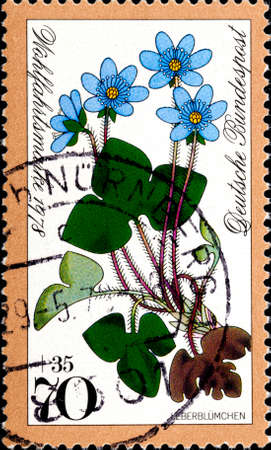 02 09 2020 Divnoe Stavropol Territory Russia postage stamp Germany 1978 Forest Flowers Pennywort Hepatica nobilis color with blue petals