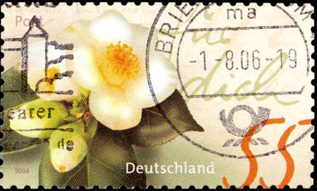 02 10 2020 Divnoe Stavropol Territory Russia postage stamp Germany 2004 Greeting stamps Camellias greeting white flower 新聞圖片