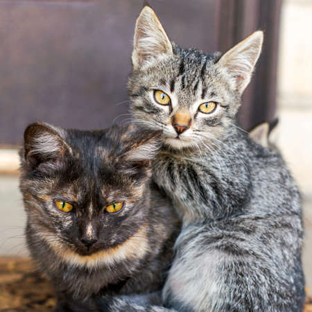 Two kittens sitting on the doorstep near the front door Фото со стока