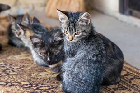 kittens sitting on the doorstep near the front door