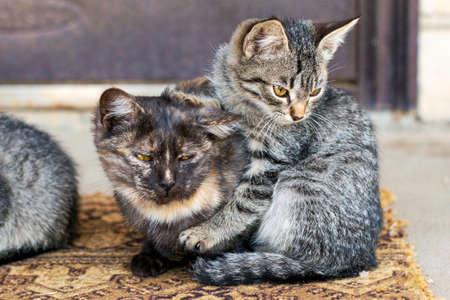 Two kittens sitting on the doorstep near the front door Stock fotó