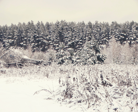 hues: Winter forest in snow minimalism style hues nature trees wallpaper view background