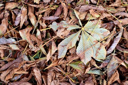 Dry leaves lay on the grass, top view