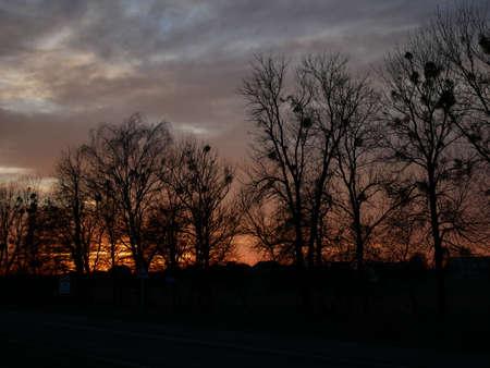 Sunset Tree sky color Archivio Fotografico
