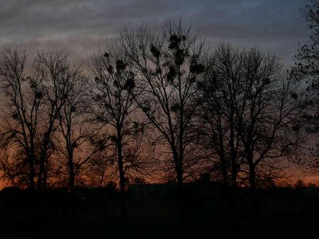 Sunset Tree sky color lightning