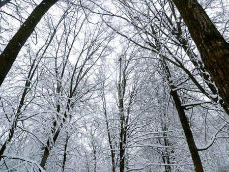 winter forest trees Archivio Fotografico