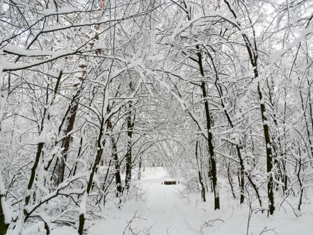 winter forest landscape trees snow nature cold