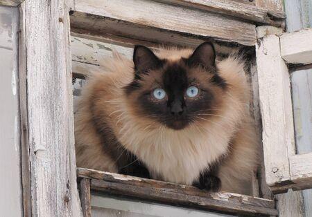 hinged:  Cat looks from small hinged window pane window