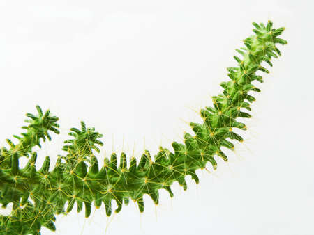types of cactus: Young green cactus on white background