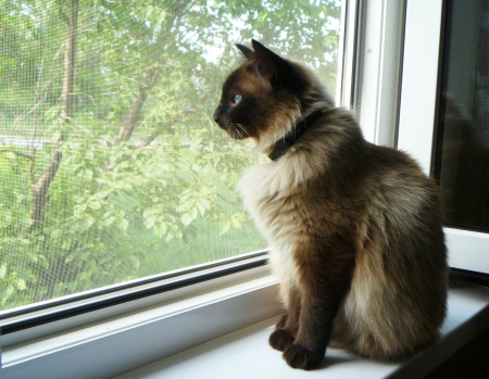 Cat peers into window photo