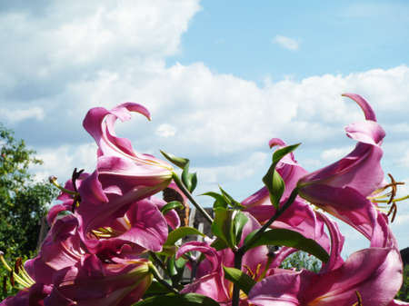 flowerses: Decorative flowerses to lilies Stock Photo