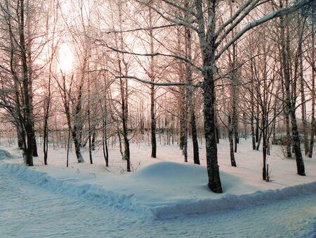 Winter sundown sun in wood Stock Photo - 17317743