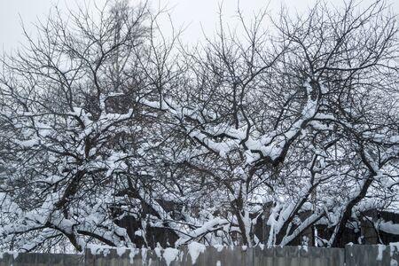 winter garden: Winter garden in snow Stock Photo
