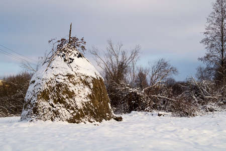 coldly: Winter landscape in rural terrain with tree and snow in Russia Stock Photo