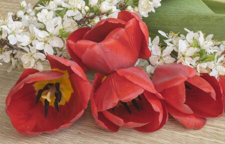 gentile: Spring bouquet from red tulip and white flower to cherries