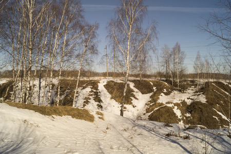 eminence: Spring landscape with birch in rural terrain on background blue sky Stock Photo