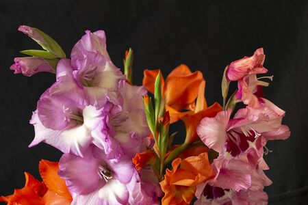 Bouquet beautiful gladiolus insulated on black background at spring length of time
