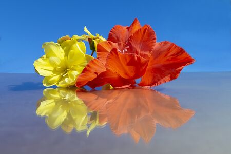 Flower begonia and red gladiolus with reflection on background blue sky by summer Zdjęcie Seryjne