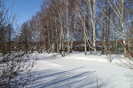 Village in birch wood in winter on background blue sky at solar day