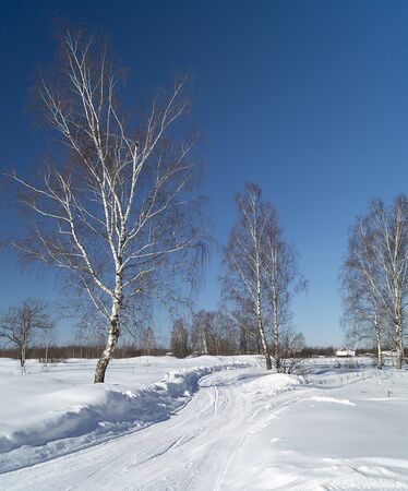 Winter landscape in rural terrain on background blue sky Zdjęcie Seryjne
