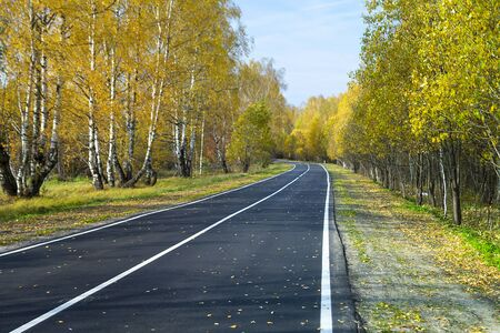 Asphalted road with white band on background blue sky in autumn wood