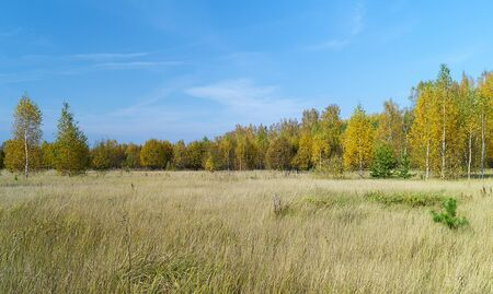 Autumn landscape in rural terrain on background blue sky at solar day