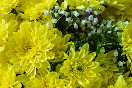 Yellow bouquet from beautiful chrysanthemums at solar year day